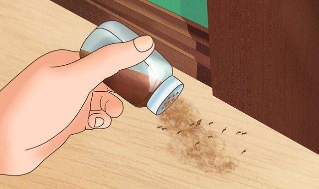 Petua Menghalau 7 Jenis Serangga Perosak Yang Sering Ditemui Dalam Rumah.