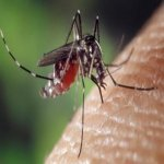Inilah 10 Cara Halau Nyamuk Yang Dijamin Berkesan. Boleh Cuba!