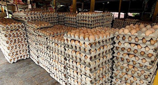 Digelak Orang Dari Pegawai Bank Jadi Penjual Telur. Lelaki Ni Bangga Jual 30,000 Telur Sehari