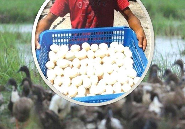 Jualan Telur Masin Usahawan Pulau Pinang Meningkat Dari 6000 ke 12000 Sebulan. ALLAHUAKBAR