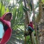 Demi Keluarga Ibu Tunggal Ini Panjat 60 Batang Pokok Pinang Sehari.