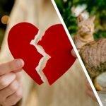 45 Tahun Kahwin Akhirnya Bercerai Kerana Kucing.