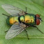 Pastikan Rumah Anda Bebas Dari Lalat