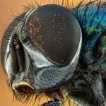 Petua Menghalau Serangga Dan Haiwan Perosak
