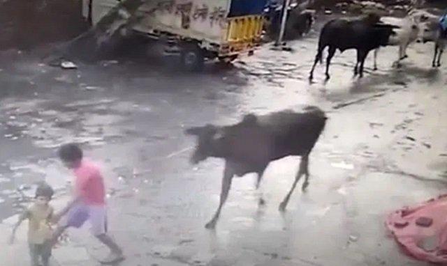 Lembu Mengamuk