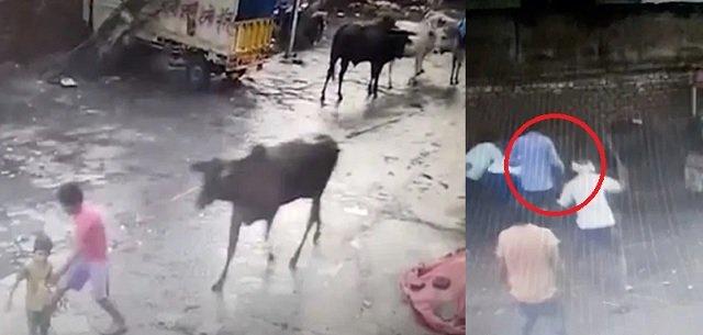 lembu marah