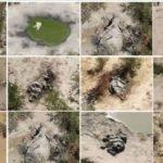 Terminum Air Toksin, 300 Gajah Mati