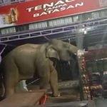 Panik Gajah Lapar Masuk Kedai Cari Makanan