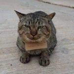 3 Hari Kucing Ini Hilang. Akhirnya Pulang Dengan Sekeping Nota Yang Mengejutkan.