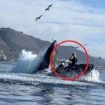 Dua Lelaki Nyaris Ditelan Ikan Paus Ketika Berkayak