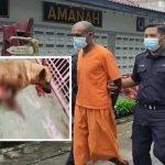 Padah Rodok Perut Anjing Hingga Mati, Lelaki Dipenjara 12 Bulan