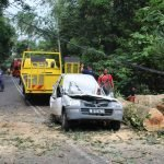Seorang Wanita Maut Kereta Dipandunya Dihempap Pokok.
