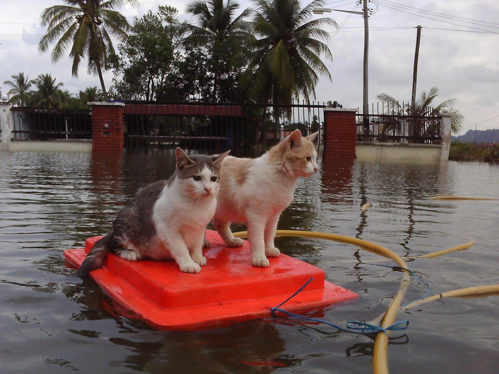 Kelab SKJP Jalankan Misi Khas Selamatkan 'Si Bulus' Akibat Banjir