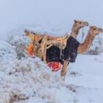 Kejadian Luar Biasa, Salji Turun Di Gurun Sahara Dan Arab Saudi