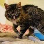 Hampir 20 Tahun Hilang, Kucing Phoebe Habiskan 'Hari Terakhir' Bersama Tuannya