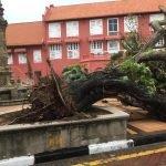 Berusia Lebih 100 Tahun, Pokok Batai Laut Ikon Bandar Melaka Rebah Pagi Tadi