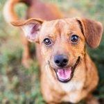 Pemilik Anjing Mati Ditembak Pencuri Setelah Anjing Peliharaannya Dibunuh