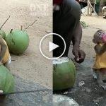 Gelagat Comel Yaya Si Monyet Kecil Ingin Minum Air Kelapa