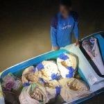 Cuba Seludup 3000 Telur Penyu, Seorang Lelaki Warga Filipina Ditahan