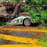 Seorang Lelaki Maut Kereta Dinaiki Dihempap Pokok