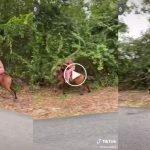 'Skill' Gadis Ini Tunggang Kuda Liar Buat Ramai Ternganga. Ada Video