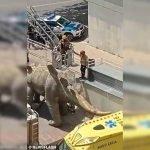 Penemuan Mayat Lelaki Dalam Patung Dinosaur
