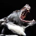 Anjing 'Makan' Tuan, Serang Kanak-Kanak 4 Tahun Sehingga Maut