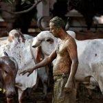 'Jangan Gunakan Najis Lembu Untuk Merawat Covid-19' Jelas Doktor India