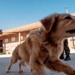 Gunakan Anjing Untuk Mengesan Individu Dijangkiti Covid-19