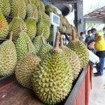 Beli Durian Boleh, Tapi Jangan Anjur 'Pesta Durian' - Polis Perak