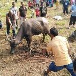 Solat Aidiladha Dan Ibadah Korban Dibenarkan Di Sabah
