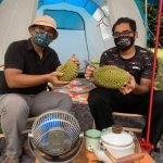 Bekas Pensyarah Bermalam Di Kebun Tunggu Durian Gugur