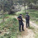 Operasi Musnah Kebun Durian Musang King Berjalan Lancar