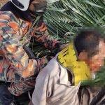 Lelaki Warga Emas Cedera Dihempap Pokok Kelapa