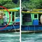 Video Aksi 'Backflip' Seekor Lembu Buat Ramai Terhibur.
