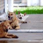 Kanak-kanak Perempuan Cedera, Terjatuh Dikejar Anjing Liar