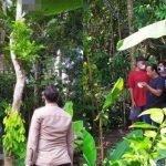 Mayat Seorang Lelaki Ditemui Tergantung Di Pohon Rambutan.