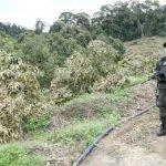 Setiausaha Agung MCA Mohon Kebenaran Jabatan Perhutanan Negeri Untuk Pekebun Ambil Barang