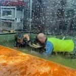 Majlis Ulang Tahun Bertukar Tragedi, Tangan Pelatih Haiwan Dibaham Buaya