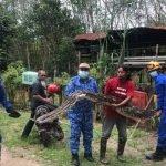 Selepas Telan Seekor Kambing, Ular Sawa Seberat 70 Kilo Berjaya Ditangkap APM