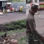 Seolah-olah Ada Akal, Apa Yang Anjing Ni Buat Untuk Tuannya Buat Ramai Kagum. Ada VIDEO